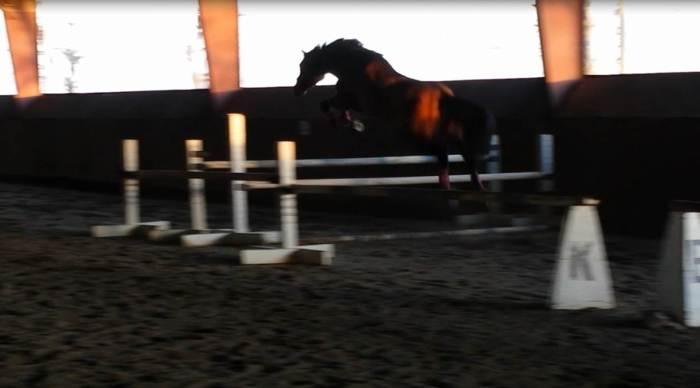 free jump 1