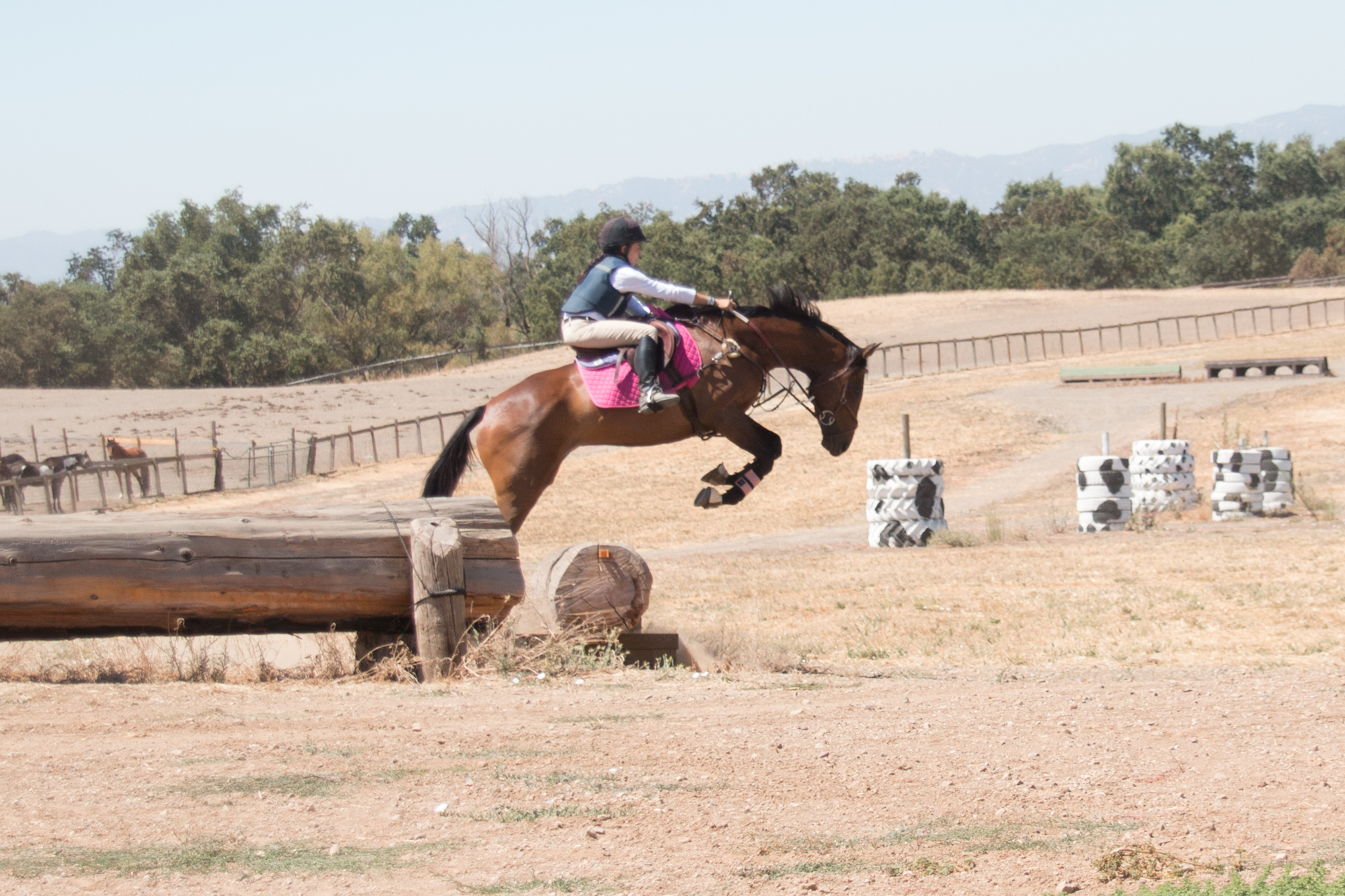 Everyday Fail Wrap Up Zen And The Art Of Baby Horse Management