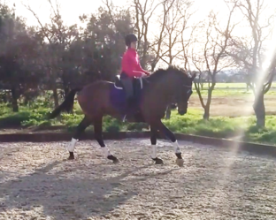 feb dressage canter 2