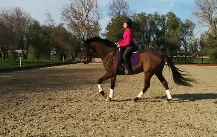 feb dressage canter 3