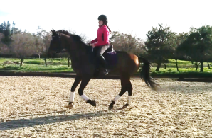 feb dressage canter 4
