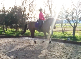 feb dressage canter