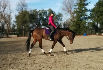 feb dressage stretch